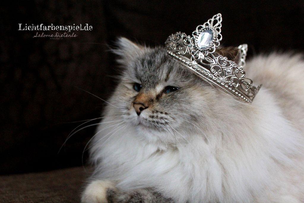 Schnnekönigin