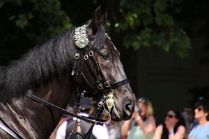 Trooping the Colour Pferd Portrait