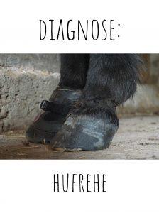 Diagnose Hufrehe
